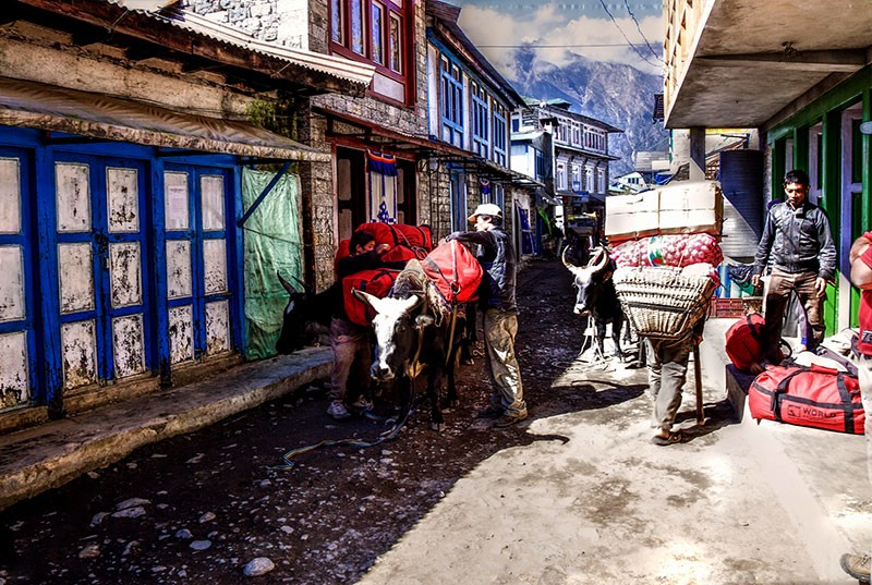 Local Porters Loading Luggage on Donkey