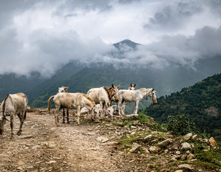 Local Lifestyle of people in Annapurna Region